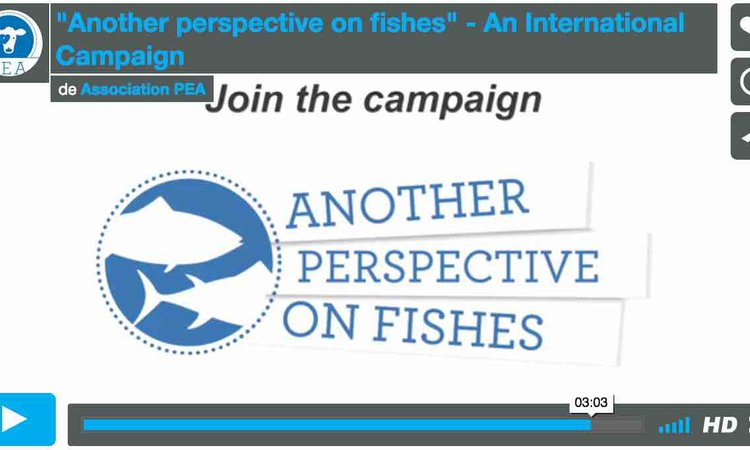"Video ""Another Perspective on Fishes"""