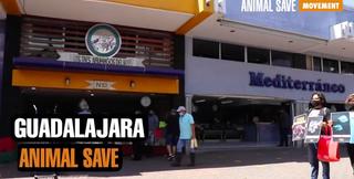 Guadalajara Animal Save.png